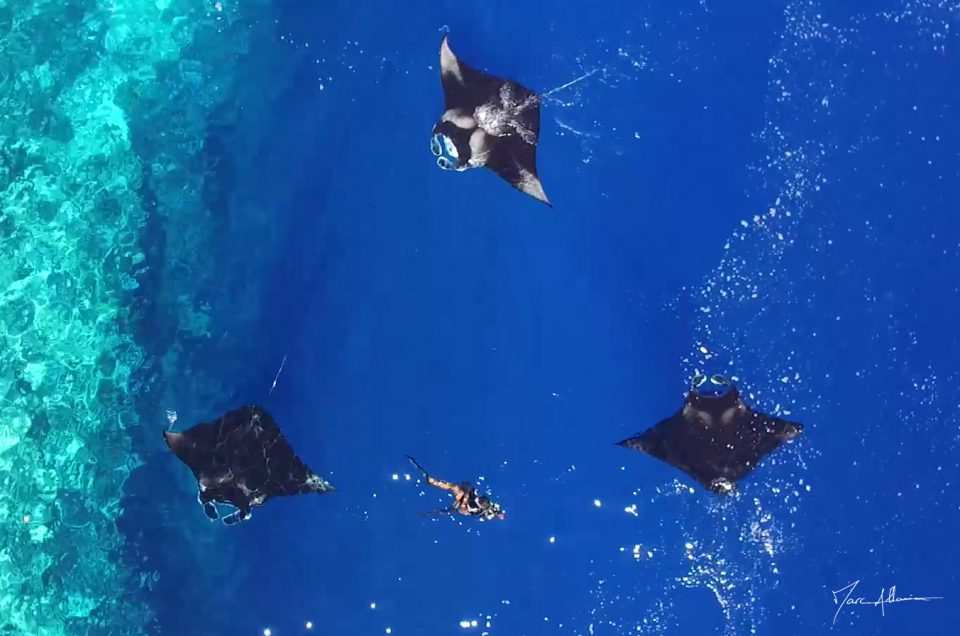 Mayotte, l'Afrique Bleue – Raies Manta – LE TEASER !