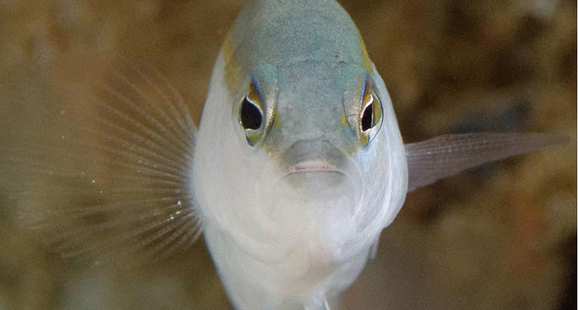 Nouvelles espèces dans le lagon – 2017
