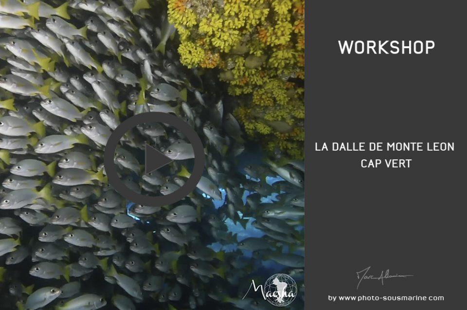 YOUTUBE • LA DALLE DE MONTE LEON